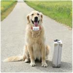tkstar-pet-dog-collar-gps-tracker-11