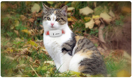 tkstar-pet-dog-collar-gps-tracker-3