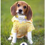 tkstar-pet-dog-collar-gps-tracker-p1